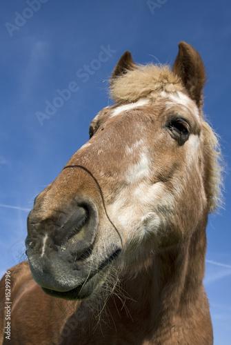 Foto op Canvas Paarden pferdekopf