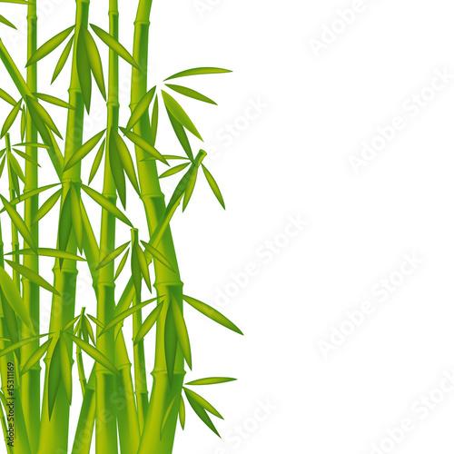 Foto-Kissen - Bambus