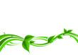 Bio Blätter mit Regentropfen
