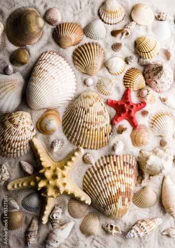 Foto-Kissen - Shells