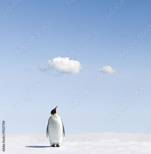 Fotobehang Pinguin Weather