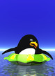 canvas print picture - Pingiun afraid to swim