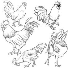 Rooster Set 1 - Black Hand Drawn Illustration