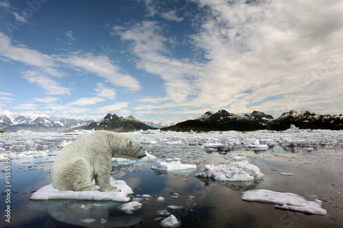 Photo Stands Polar bear Sad Polar bear because of global warming