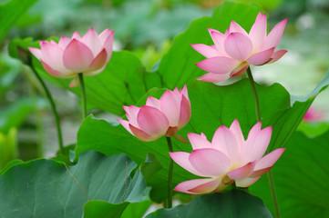 Obraz na Szkleflowers