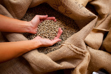 A Hand Full Of Raw Coffee Beans