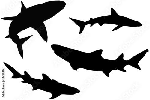 Requins Canvas Print