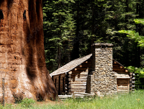 Little house next to giant sequoia #15452356