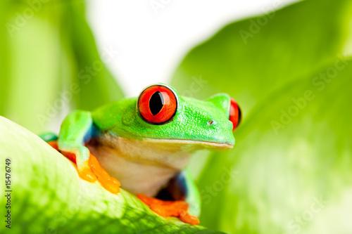 Tuinposter Kikker frog on a leaf