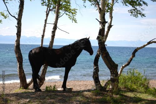Fototapety, obrazy: Lac Baikal, Siberie