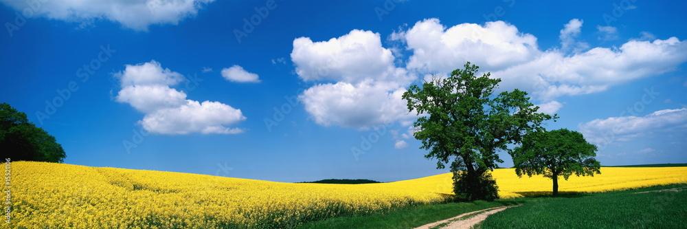 Fototapeta Weg, landschaft, Baum, Wolkenhimmel, Sommer, Deutschland