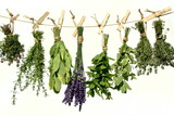 Fototapeta Lavender - Duftkräuter