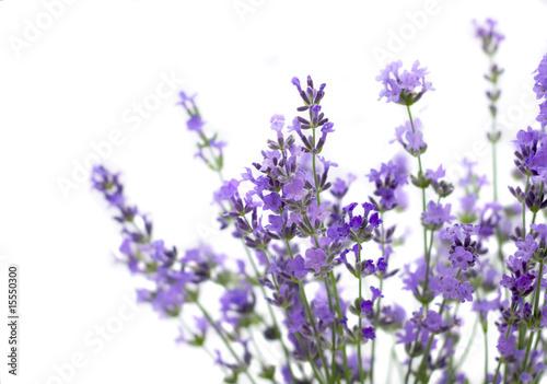 Cadres-photo bureau Lavende Lavender