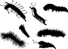 Caterpillar Silhouettes Collec...
