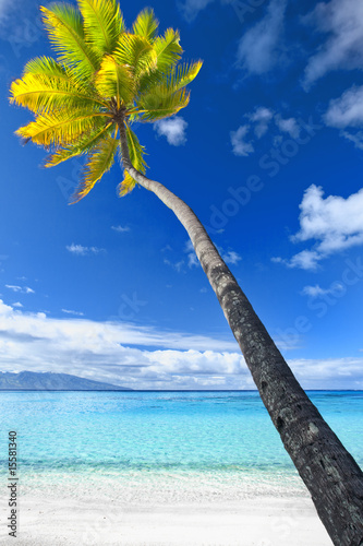Foto-Kissen - Palm tree hanging over stunning blue lagoon (von Martin Valigursky)