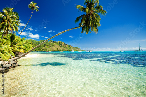 Foto Rollo Basic - Palm tree hanging over stunning lagoon (von Martin Valigursky)