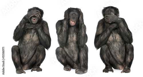 Foto op Aluminium Aap Three Wise Monkeys : Chimpanzee - Simia troglodytes (20 years ol