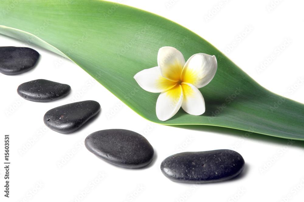 Doppelrollo mit Motiv - Lava Stones with frangipani (plumeria)  flower on the Leaves