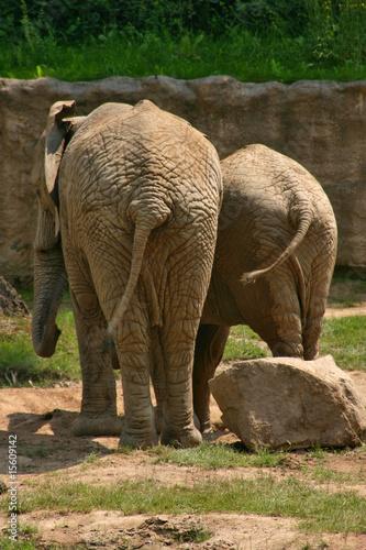 Wall Murals Elephant African Bush Elephant