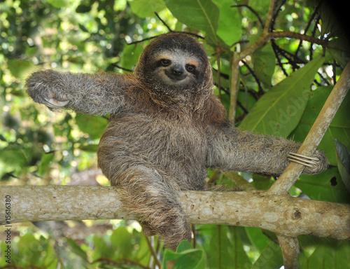 Papel de parede  three toed sloth, nicaragua