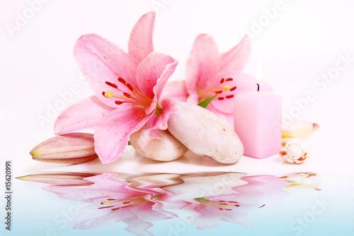 Photo Stands Water lilies wasser, wellness