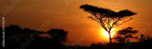 akacjowy-drzewny-zmierzch-serengeti-afryka