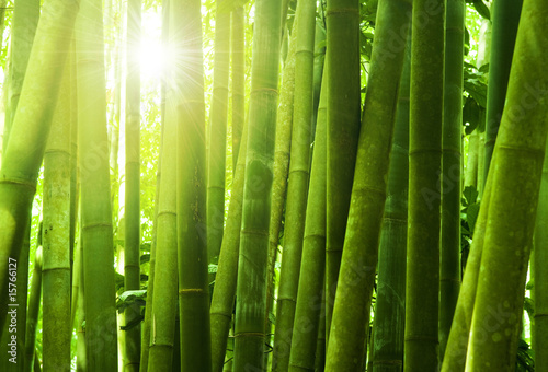 La pose en embrasure Bamboo Bamboo forest.