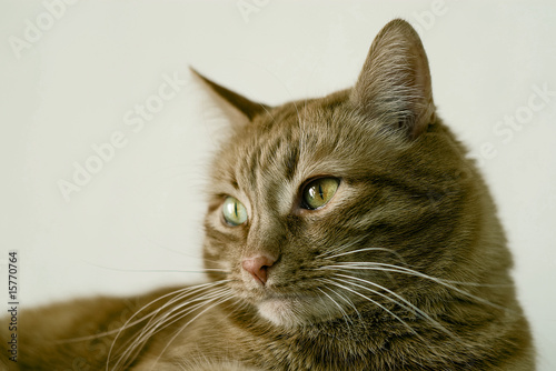 Canvas Prints Cat red cat