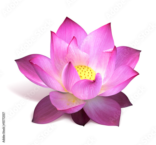 Staande foto Lotusbloem fleur de lotus