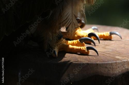 Photo artigli dell'aquila