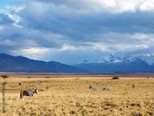 Fotografie, Tablou  Patagonie argentine