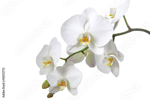 Recess Fitting Orchid Orchidee