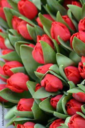 Foto auf Gartenposter Tulpen Tulpen