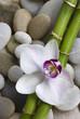 Orchidee und Bambus