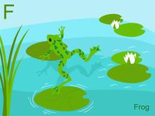 Animal Alphabet Flash Card, F For Frog