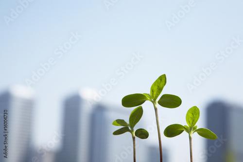 Fotomural 高層ビルと新芽
