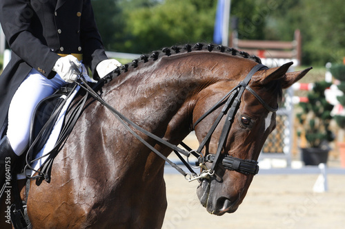 La pose en embrasure Equitation Dressursport