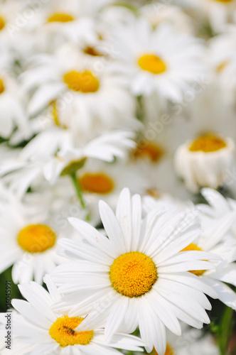 Foto-Schiebegardine ohne Schienensystem - flower
