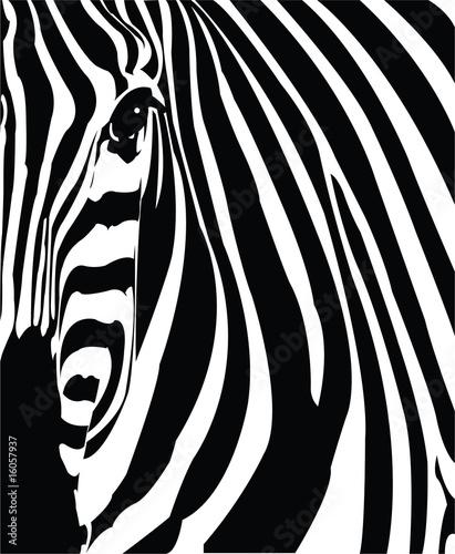 In de dag Zebra Cebra