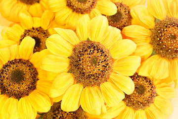 Fototapetabeautiful yellow Sunflower petals background