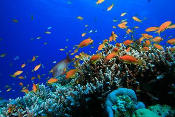 Fototapeta na wymiar Beauty in the Underwater World