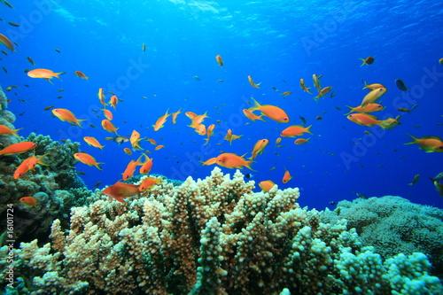 Foto auf Gartenposter Unterwasser Beautiful Coral Reef