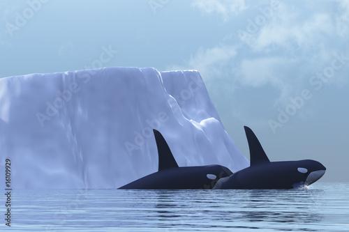 Fotografie, Obraz  ORCA