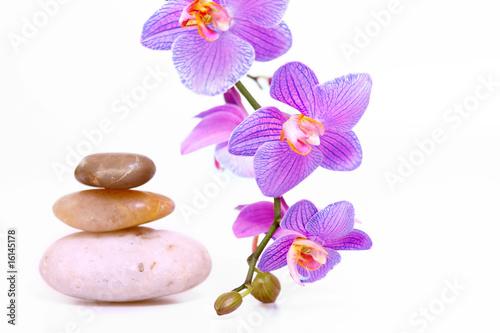 Akustikstoff - wellness,orchidee
