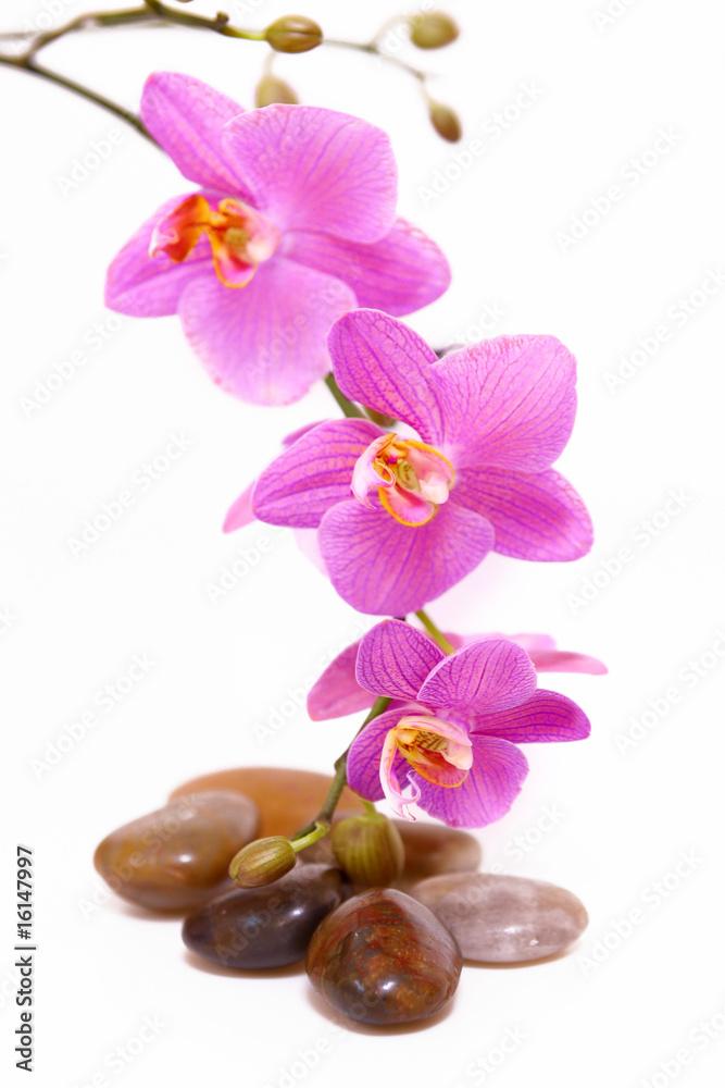 Doppelrollo mit Motiv - wellness,orchidee