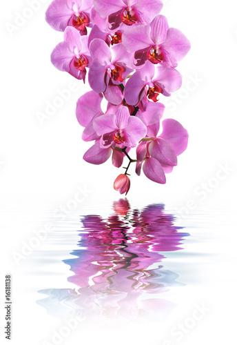 Balnéothérapie et Orchidée