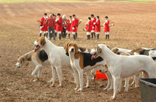 "Foxhounds. Completion Of "" Fox Hunting."""