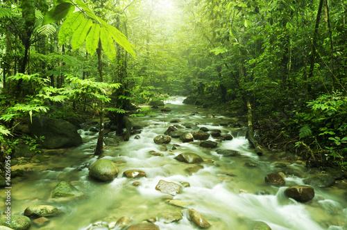 Aluminium Prints Forest river Mountain stream