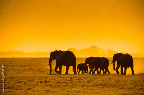 Photo  silhouettes of elephants