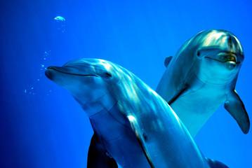 Fototapeta Delfini curiosi